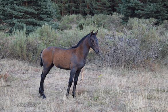 HORSES_STUD_BBREEDING FARM (11)