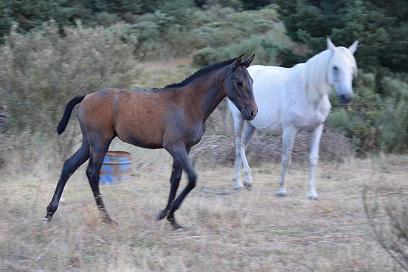HORSES_STUD_BBREEDING FARM (12)