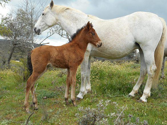 HORSES_STUD_BBREEDING FARM (13)