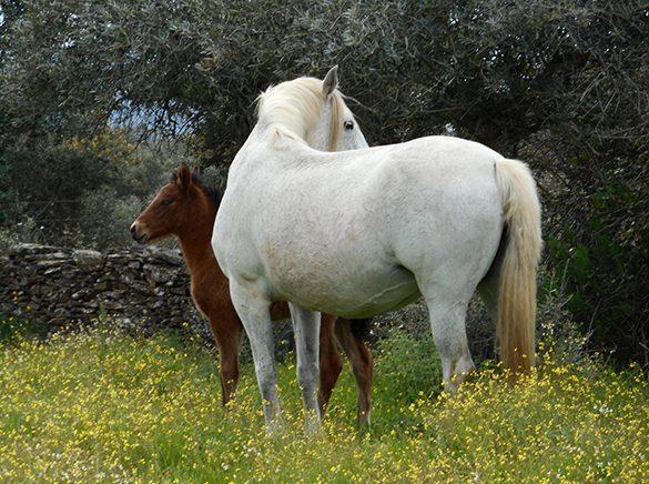 HORSES_STUD_BBREEDING FARM (15)