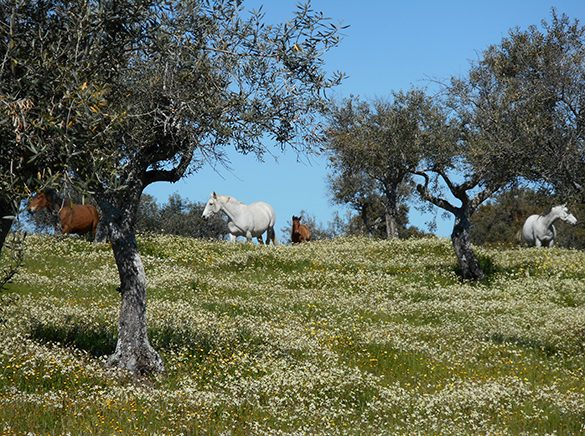 HORSES_STUD_BBREEDING FARM (17)