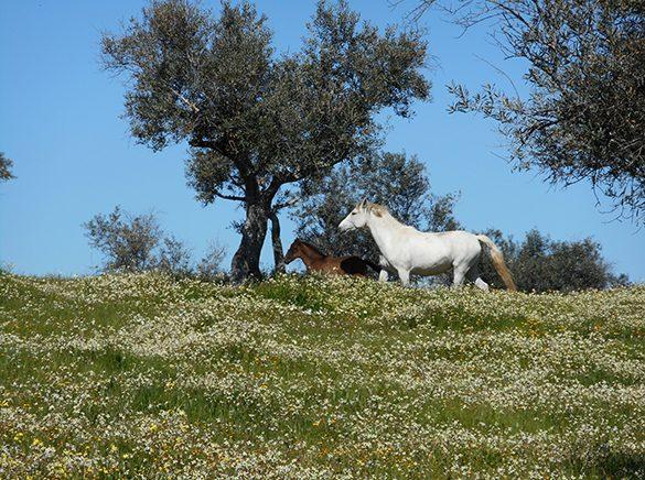 HORSES_STUD_BBREEDING FARM (18)