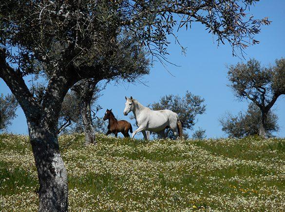 HORSES_STUD_BBREEDING FARM (19)