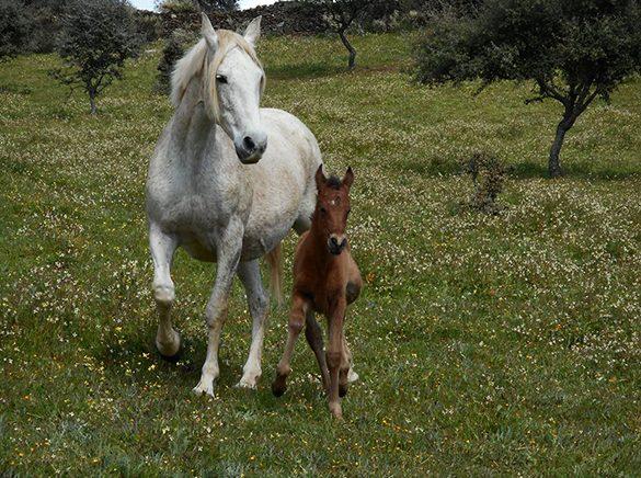 HORSES_STUD_BBREEDING FARM (2)