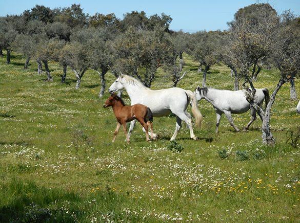 HORSES_STUD_BBREEDING FARM (20)