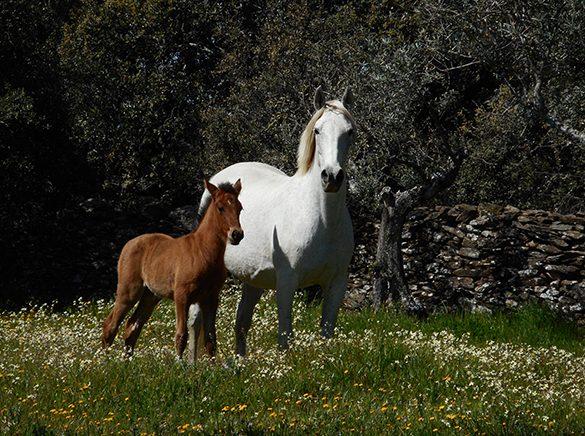 HORSES_STUD_BBREEDING FARM (21)