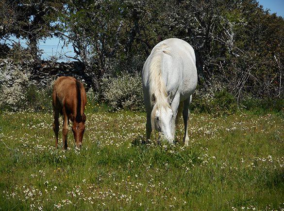 HORSES_STUD_BBREEDING FARM (22)