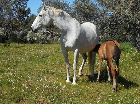 HORSES_STUD_BBREEDING FARM (23)