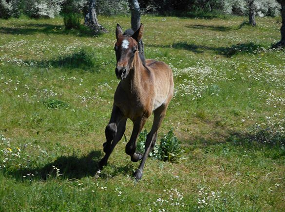 HORSES_STUD_BBREEDING FARM (24)
