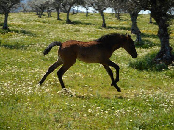 HORSES_STUD_BBREEDING FARM (25)