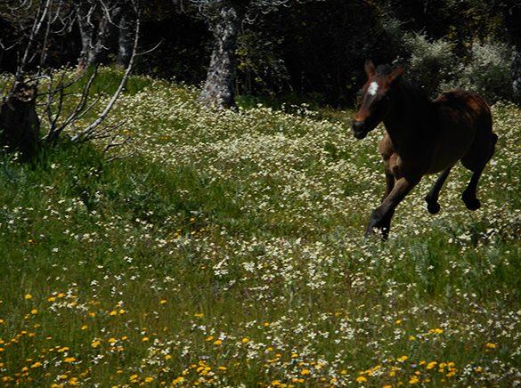HORSES_STUD_BBREEDING FARM (27)