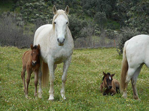 HORSES_STUD_BBREEDING FARM (4)