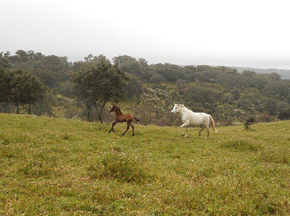 HORSES_STUD_BBREEDING FARM (5)