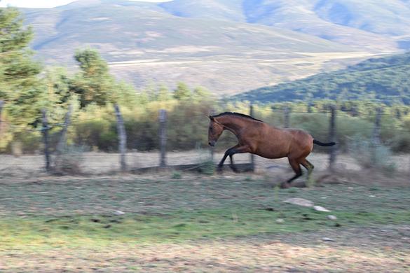 HORSES_STUD_BBREEDING FARM (7)