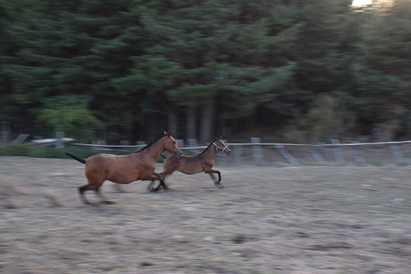 HORSES_STUD_BBREEDING FARM (8)