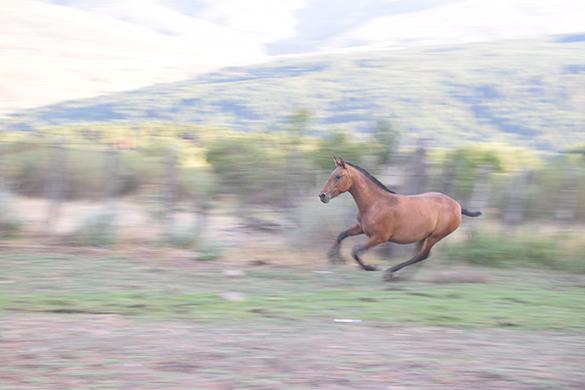 HORSES_STUD_BBREEDING FARM (9)